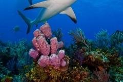 Bahamas%20Jim%20Abernethy%20Shearwater%202009-1921