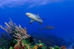 Bahamas_2009