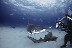 Bimini-Bahamas 2015 Originaldateiname3-3