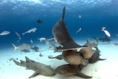 Bimini-Bahamas 2015 Originaldateiname3-34