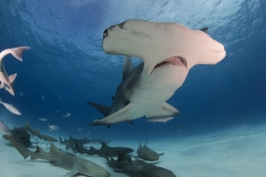 Bimini-Bahamas 2015 Originaldateiname3-52