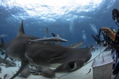 Bimini-Bahamas 2015 Originaldateiname3-7