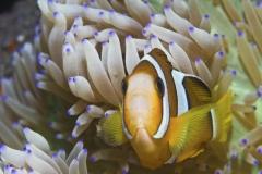 Bali Tulamben 2007 1IMG_1304
