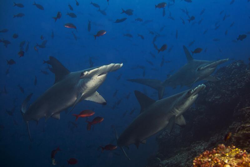 Cocos Island Costa Rica 2013-17