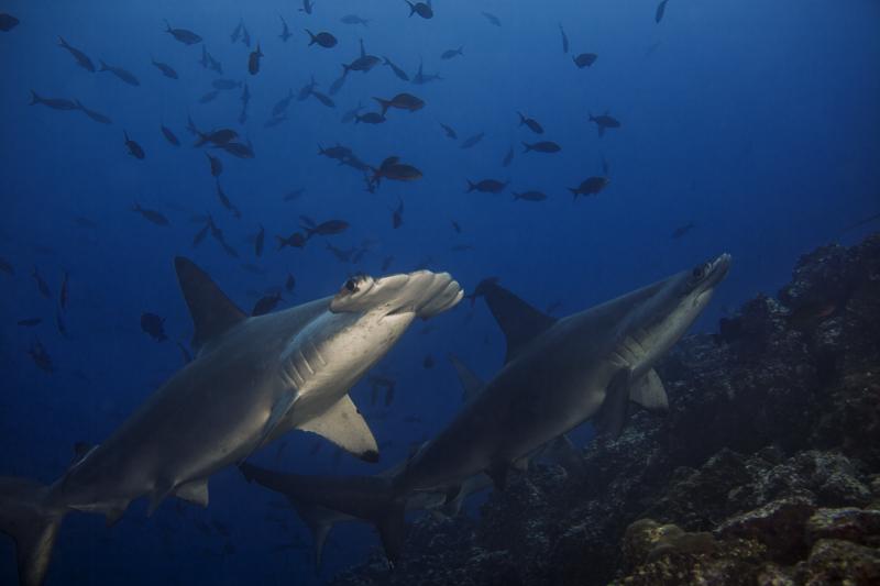 Cocos Island Costa Rica 2013-18