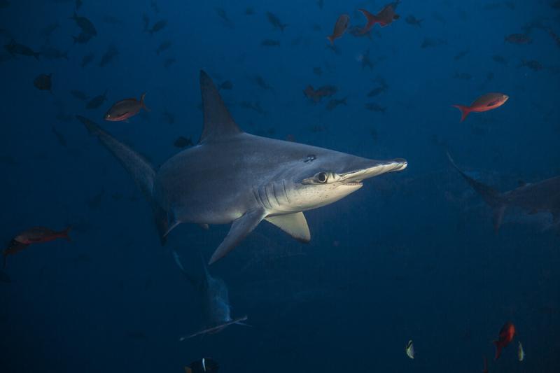 Cocos Island Costa Rica 2013-19