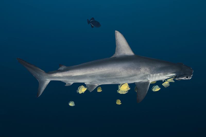 Cocos Island Costa Rica 2013-2