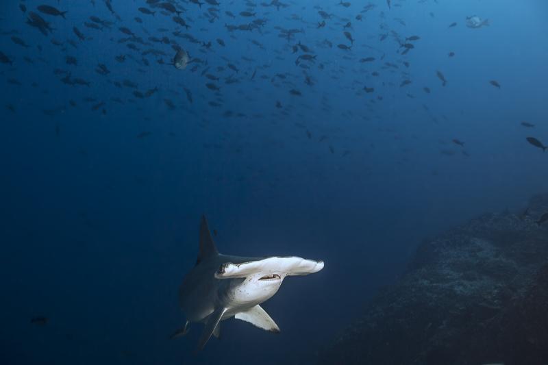Cocos Island Costa Rica 2013-23