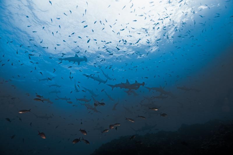 Cocos Island Costa Rica 2013-29
