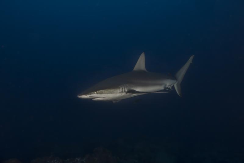 Cocos Island Costa Rica 2013-31