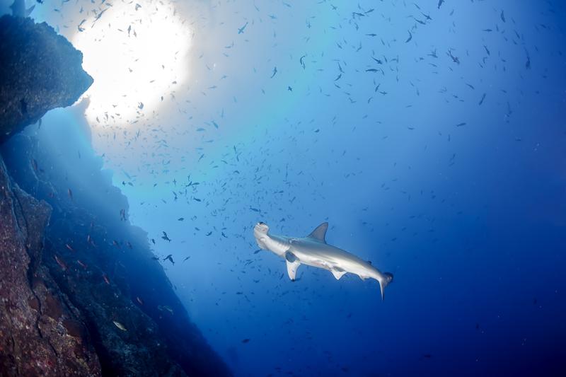 Cocos Island Costa Rica 2013-33