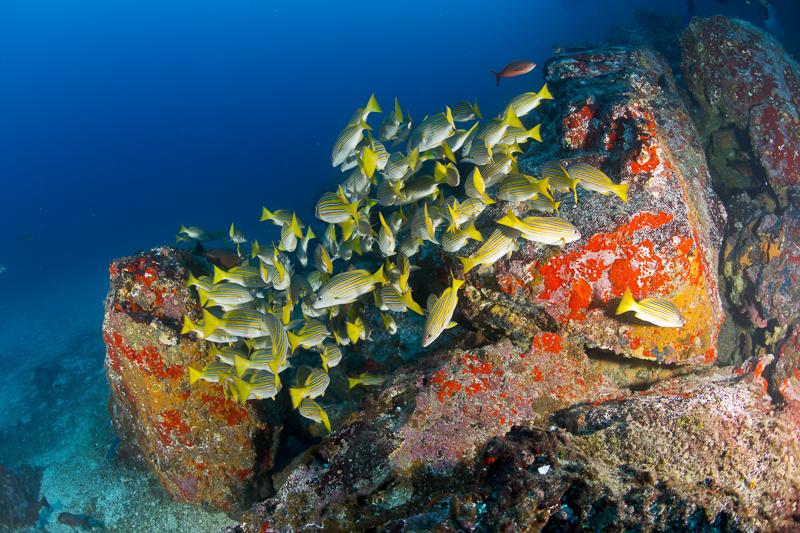Cocos Island Costa Rica 2013-39