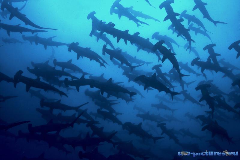 Cocos Island Costa Rica 2013-52