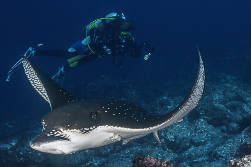 Cocos Island Costa Rica 2013-55