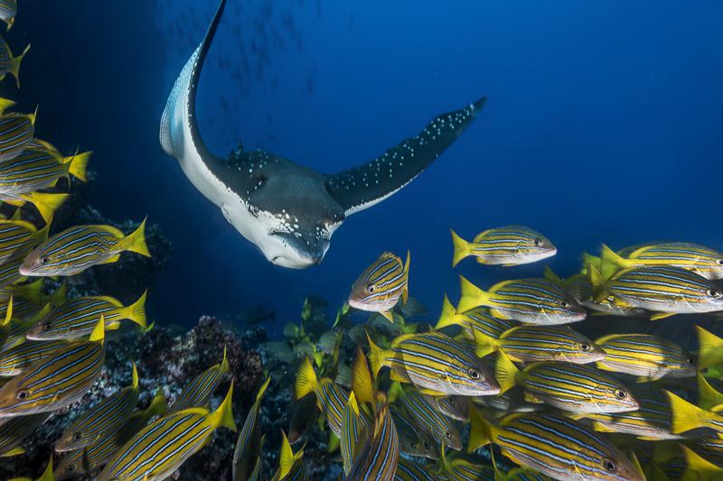 Cocos Island Costa Rica 2013-56