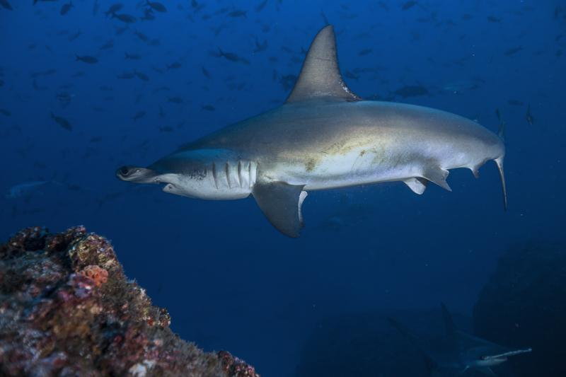 Cocos Island Costa Rica 2013-6
