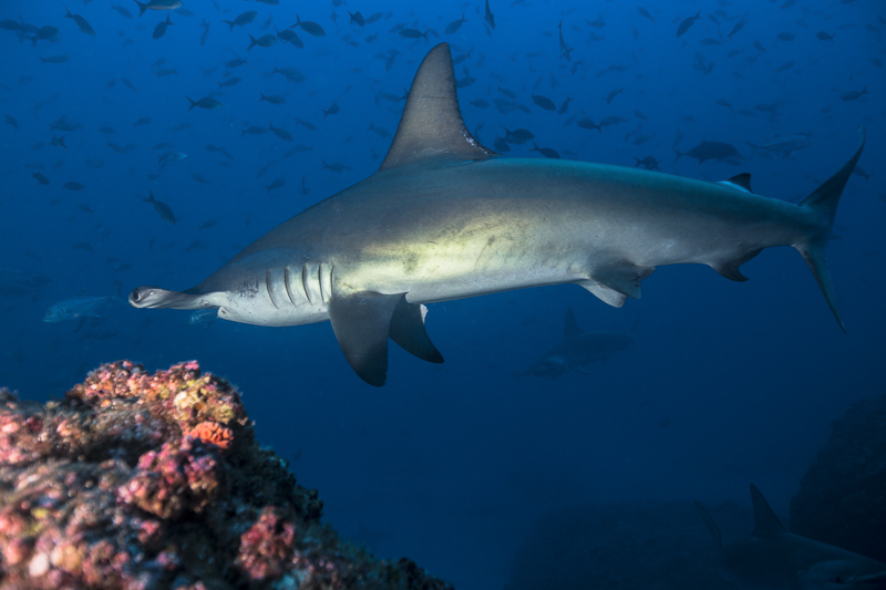 Cocos Island Costa Rica 2013-7