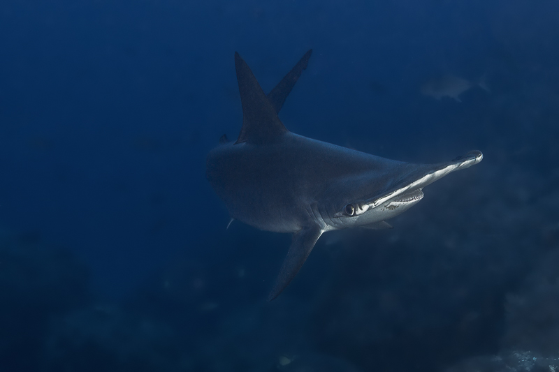 Cocos Island Costa Rica 2013-8