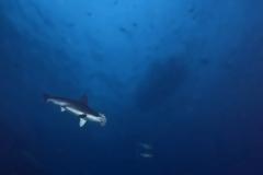 Cocos Island Costa Rica 2013-11