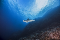 Cocos Island Costa Rica 2013-24