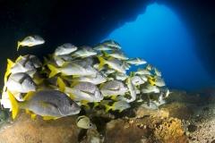 Cocos Island Costa Rica 2013-38