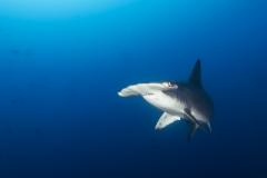 Cocos Island Costa Rica 2013-44