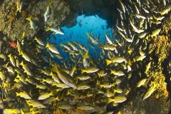 Cocos Island Costa Rica 2013-51