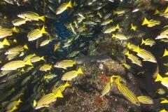 Cocos Island Costa Rica 2013-54