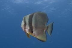 Malediven-2010-2-von-44-1-2