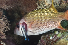 Malediven-2010-Hans-Haas-Reef-6-von-12
