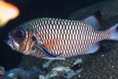 Malediven-2010-Hans-Haas-Reef-8-von-12