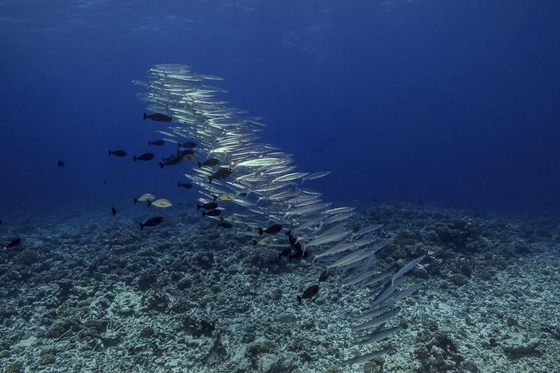 Französisch Poynesien-Südsee-109