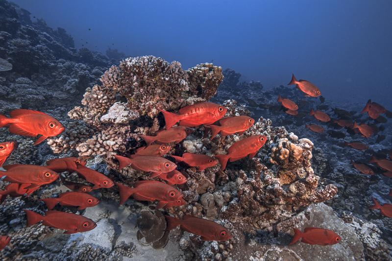 Französisch Poynesien-Südsee-146