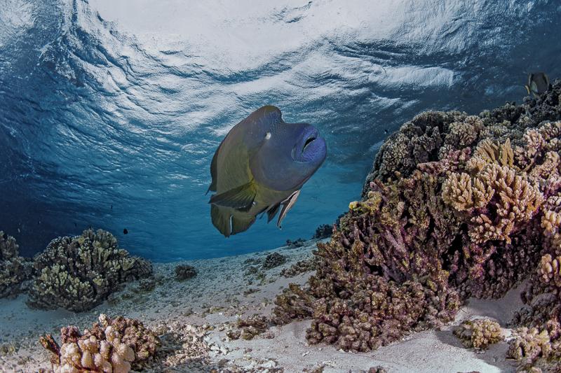 Französisch Poynesien-Südsee-160