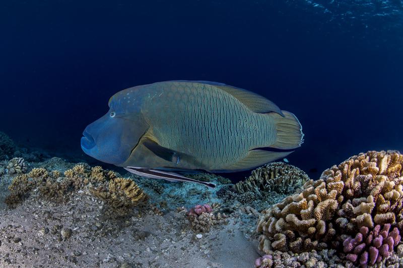 Französisch Poynesien-Südsee-161