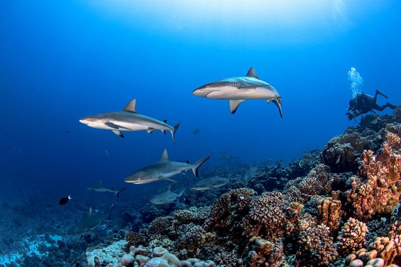 Französisch Poynesien-Südsee-162