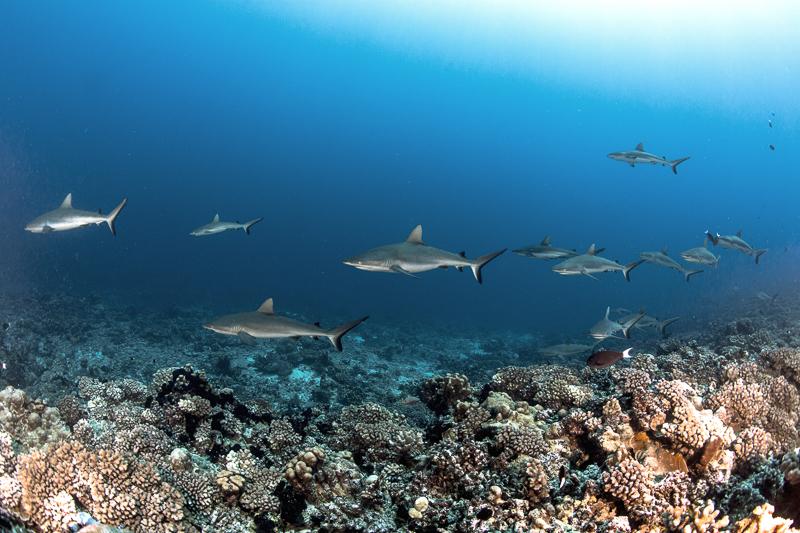 Französisch Poynesien-Südsee-165