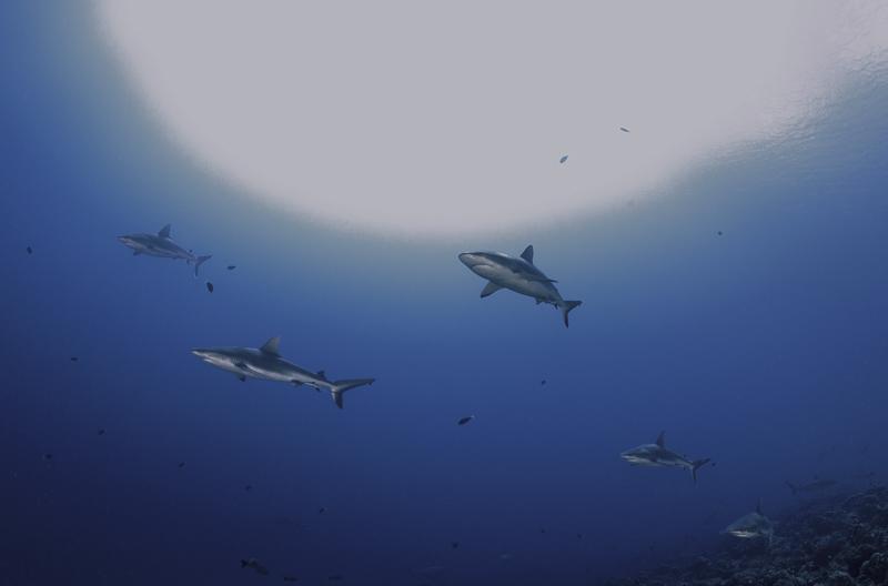 Französisch Poynesien-Südsee-167