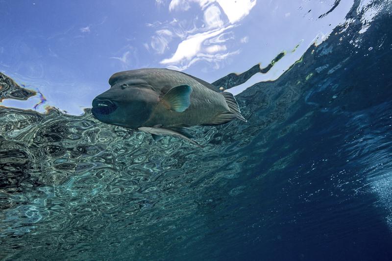 Französisch Poynesien-Südsee-174