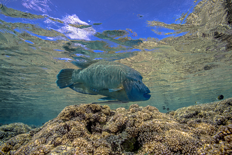 Französisch Poynesien-Südsee-175