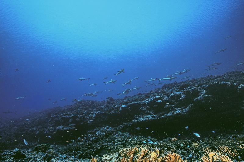 Französisch Poynesien-Südsee-176