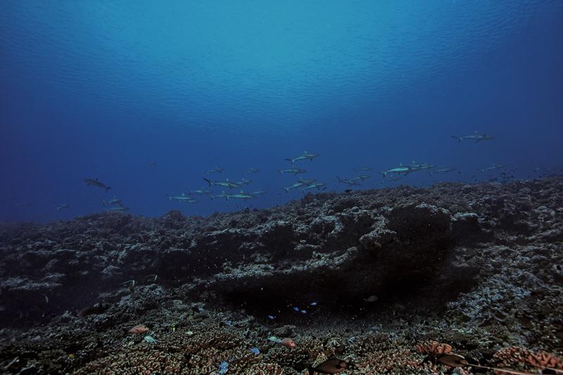 Französisch Poynesien-Südsee-177