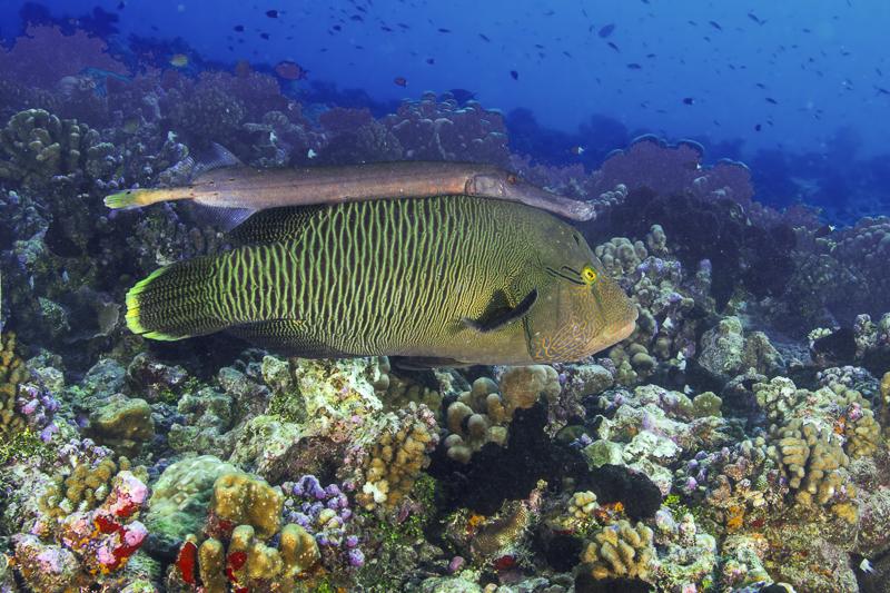 Französisch Poynesien-Südsee-198