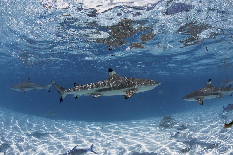 Französisch Poynesien-Südsee-22