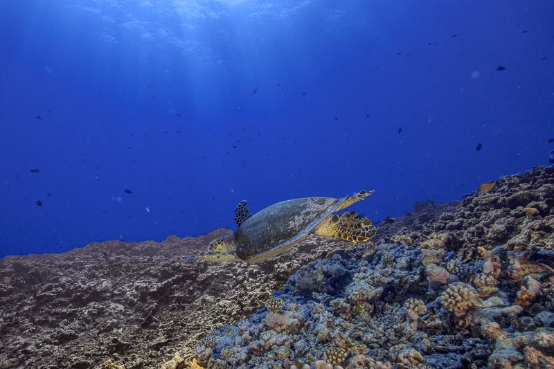 Französisch Poynesien-Südsee-35
