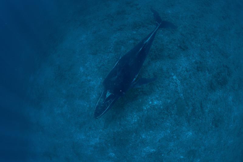 Französisch Poynesien-Südsee-44