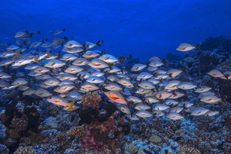 Französisch Poynesien-Südsee-76
