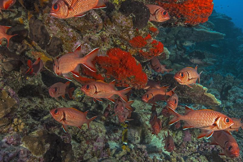Französisch Poynesien-Südsee-83