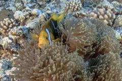 Französisch Poynesien-Südsee-36