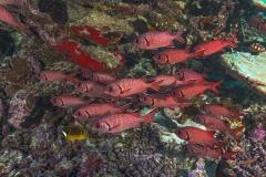 Französisch Poynesien-Südsee-84